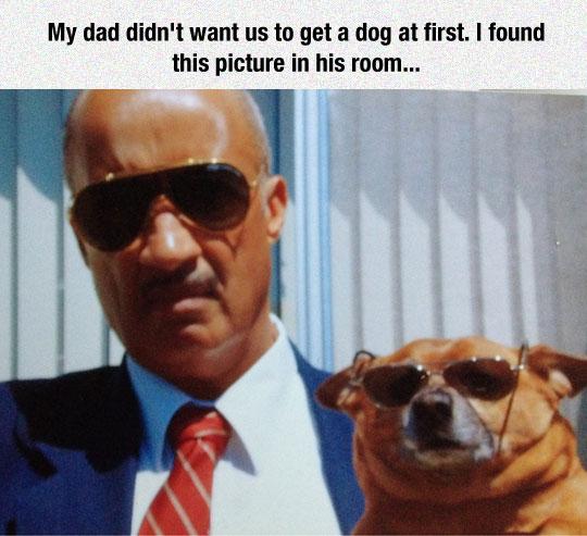 funny-man-dog-glasses-cool