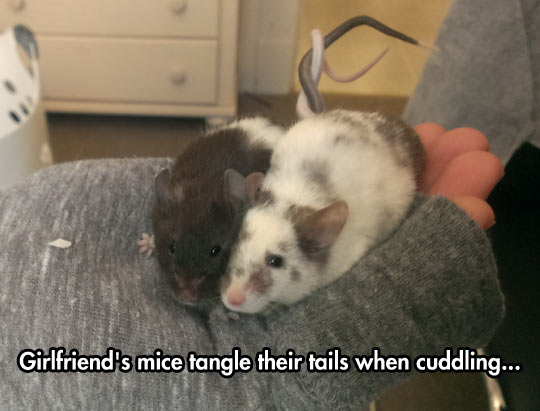 Cute Mice Love