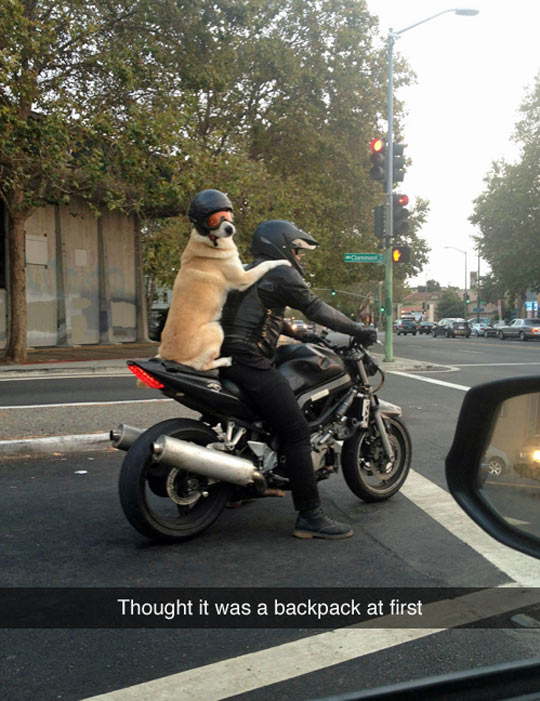 Dog Taking A Ride With Owner