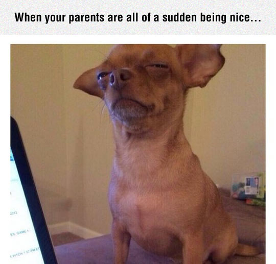 funny-parents-being-nice-dog-suspicious