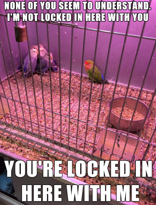 funny-parrot-birds-cage-fear