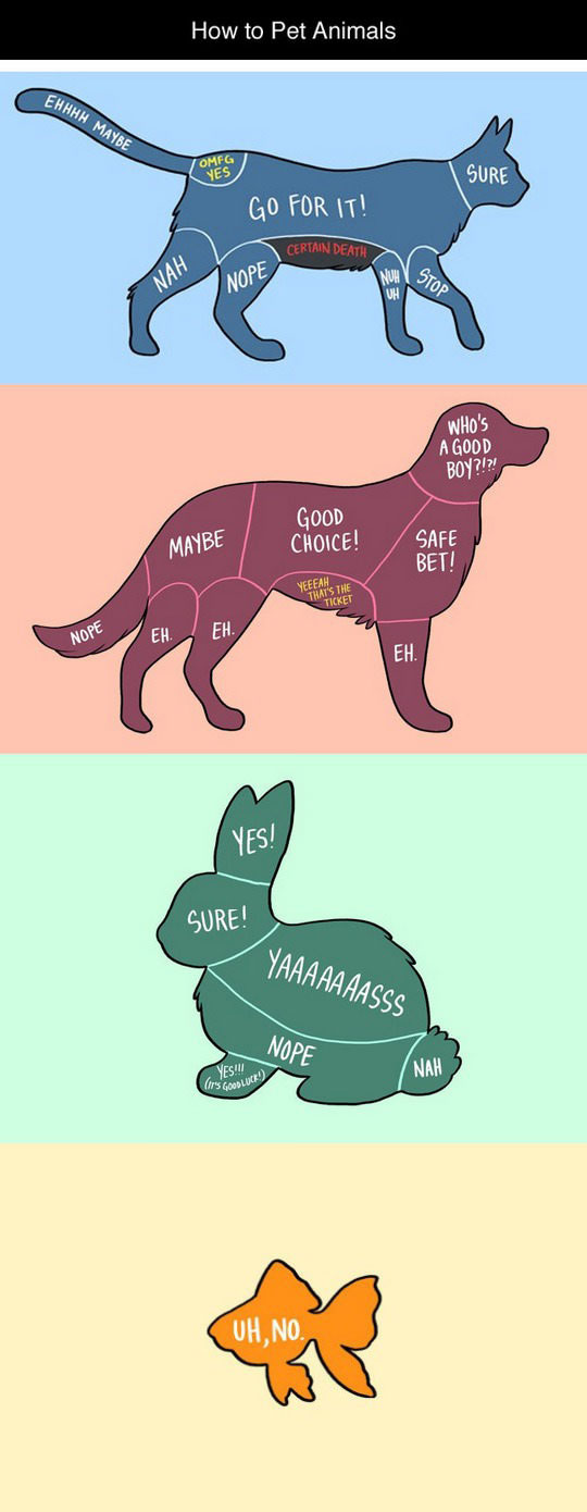 funny-petting-animals-cartoon-dogs-cats