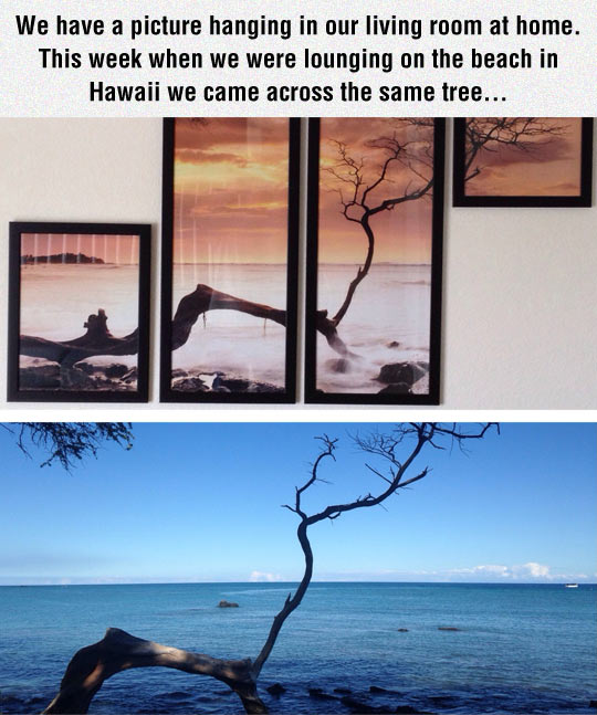 Two Different Views Of The Same Tree