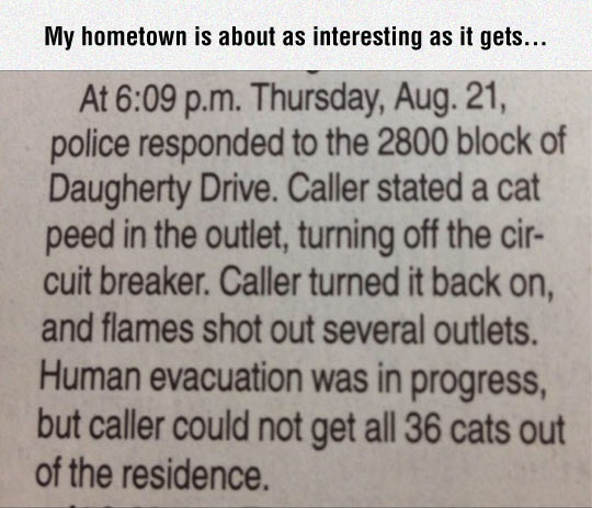 Cats Can Be Dangerous