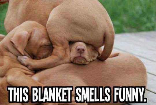 funny-puppies-brown-playing-cute