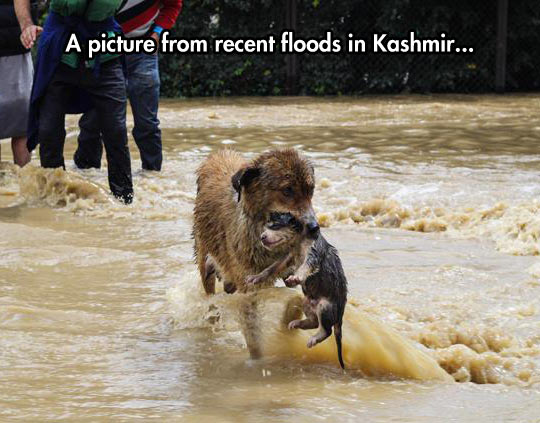 funny-river-dog-flood-puppy