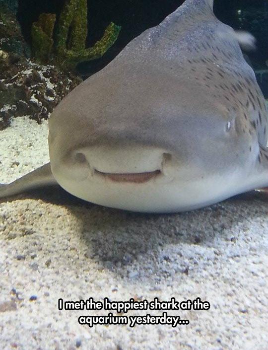 funny-shark-aquarium-happy-face