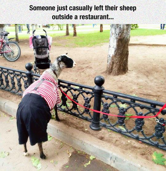 funny-sheep-restaurant-park