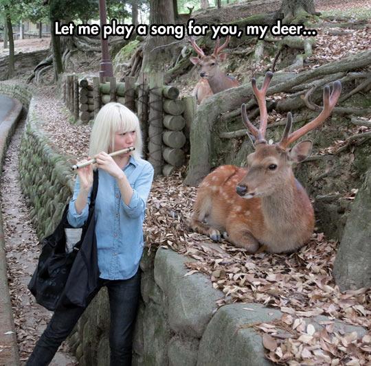 funny-song-flute-deer-Asian-girl