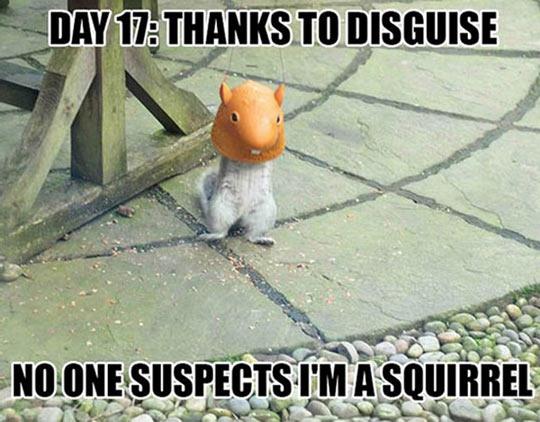 funny-squirrel-mask-feeder