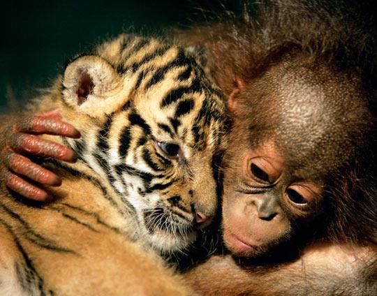 Love Between Baby Animals
