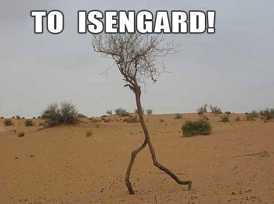 funny-tree-walking-desert
