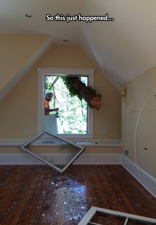 funny-tree-windows-broken