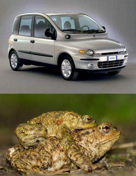 funny-ugly-car-frog-similar
