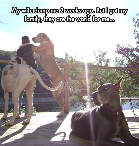 You Can Always Trust Dogs