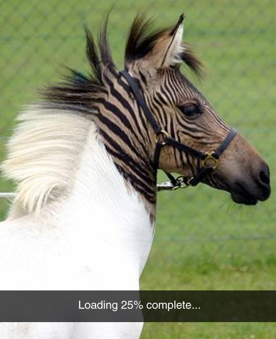 funny-zebra-loading-head-color