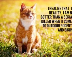 ginger-cat-outside-large-934x