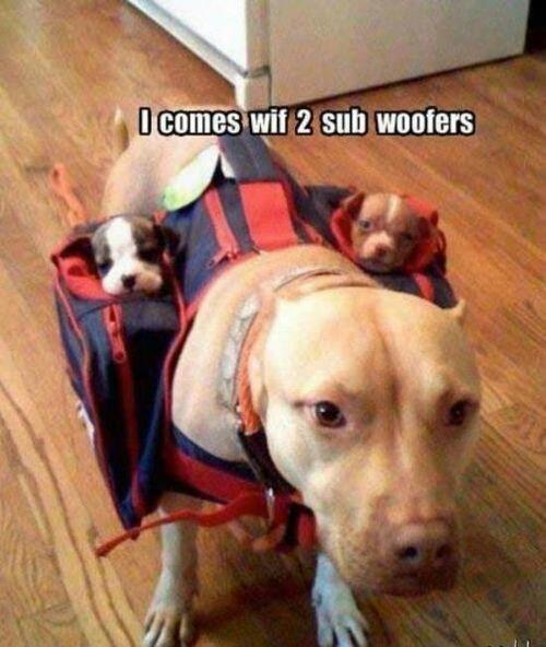 laughed-too-hard-dog