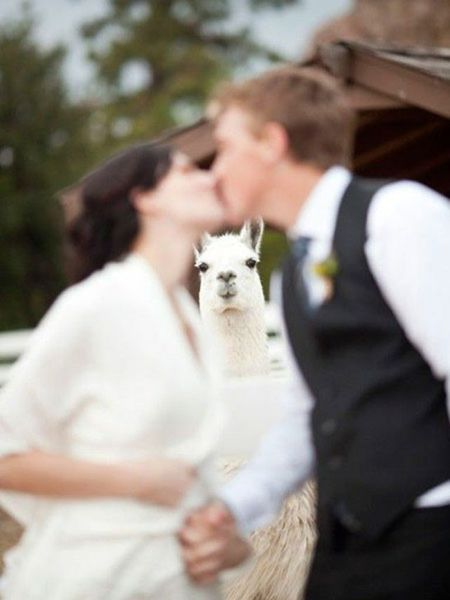 the_best_wedding_photobombs_ever_640_15