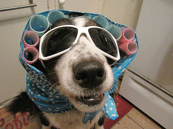 Halloween-costumes-for-pets-09