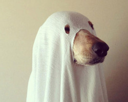 Halloween-costumes-for-pets-35