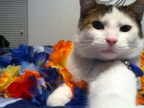 cat-selfies-1