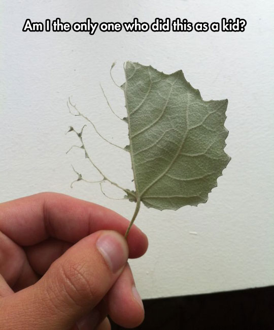 cool-leaf-peeled-branch
