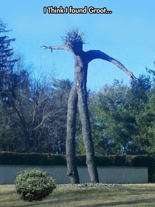 cool-tree-lookalike-person-Groot-park