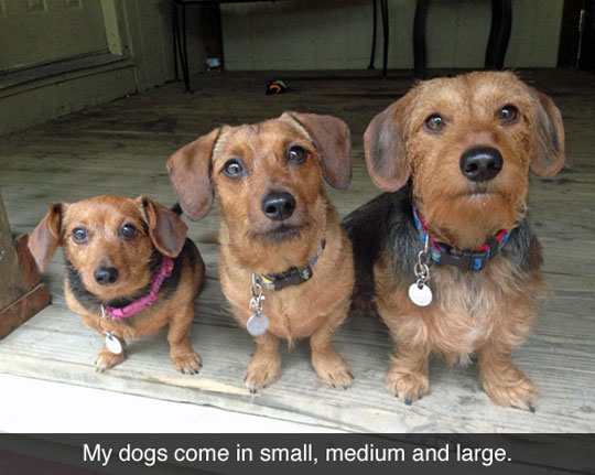 Multi-Sized Dogs