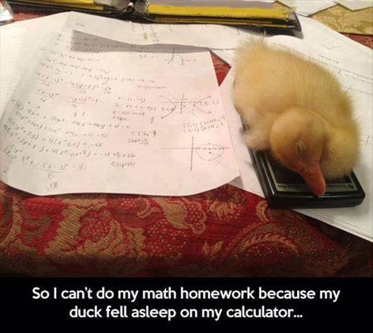 cute-duck-sleeping-calculator-homework