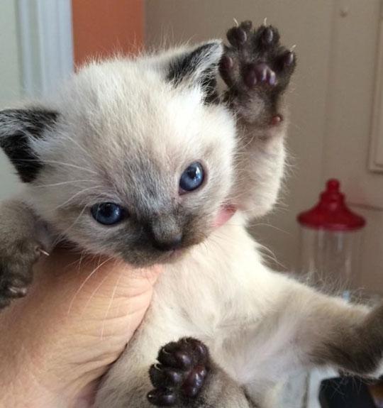 A Vile But Really Cute Beast