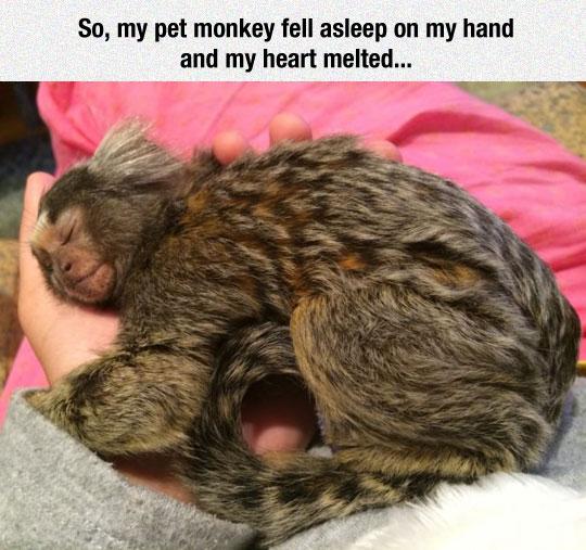 I Want A Pet Like That