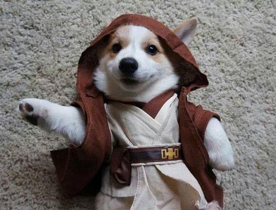 cute-puppy-Jedi-costume-cool