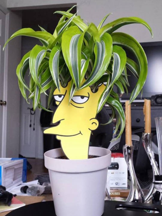 funny-Bob-Sidekick-plant