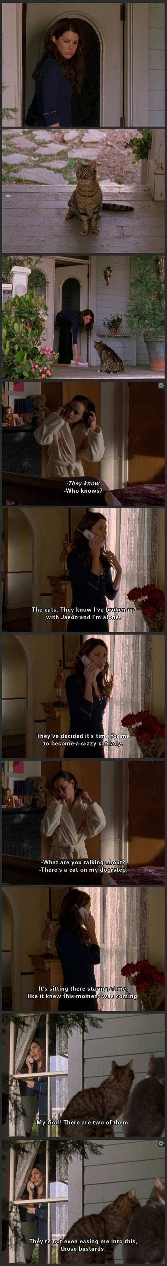 funny-Gilmore-Girls-crazy-cat-lady