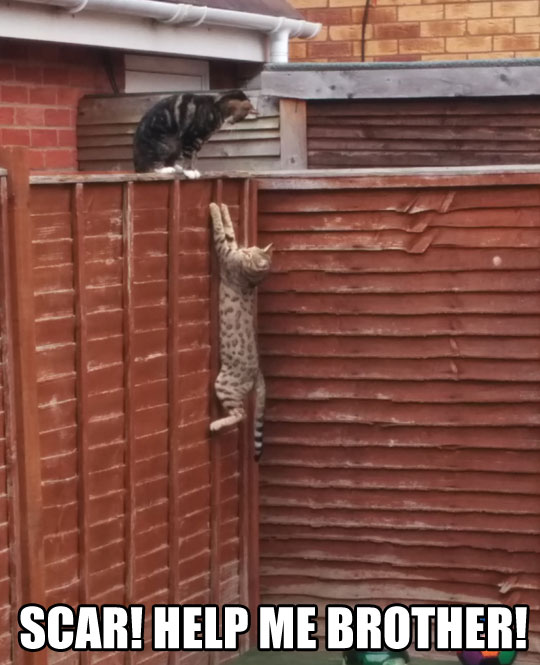 funny-Lion-King-reenactment-real-cats