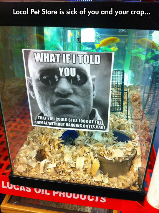 funny-Morpheus-sign-fish-cage