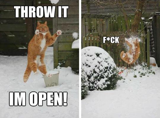 funny-Winter-cart-ball-throw