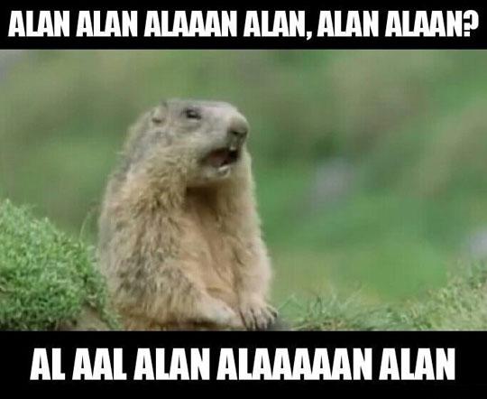 funny-animal-TV-show-marmot