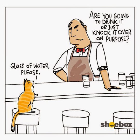 funny-bar-cat-water-waiter