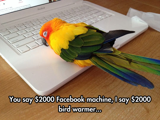 Bird Devices Are Expensive