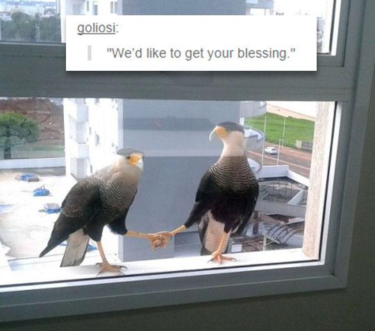 funny-birds-window-holding-hands