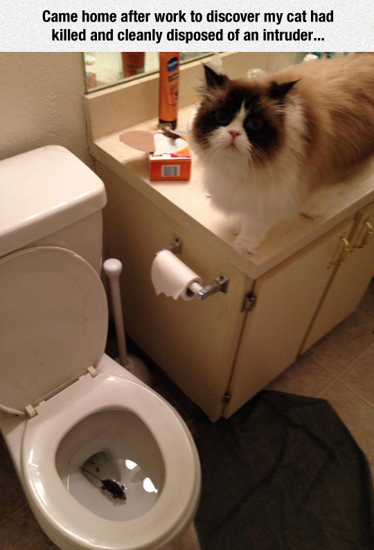 funny-cat-bathroom-dead-mouse-toilet
