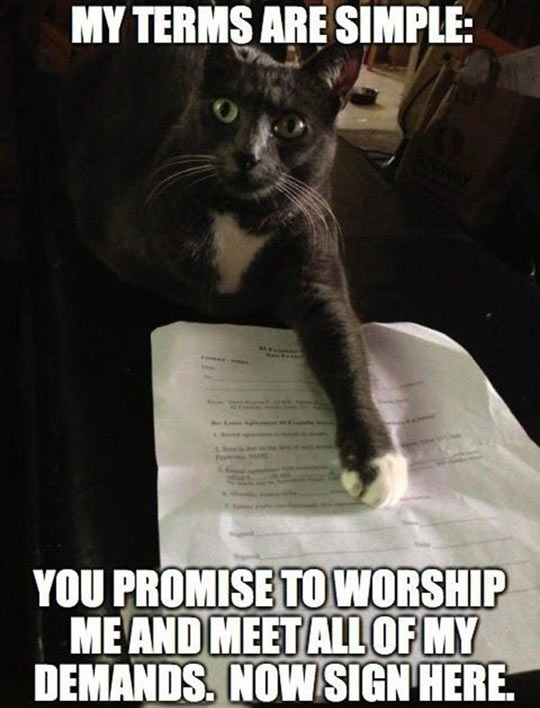 funny-cat-contract-signature-asking