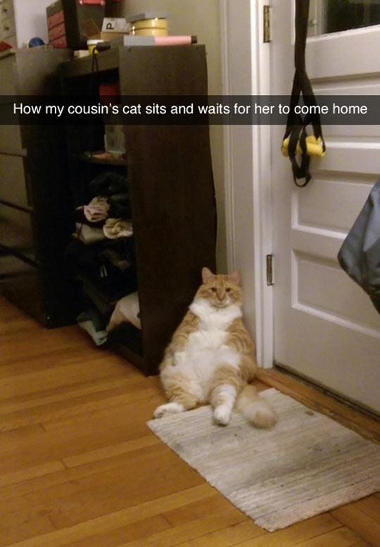 funny-cat-door-waiting-sitting