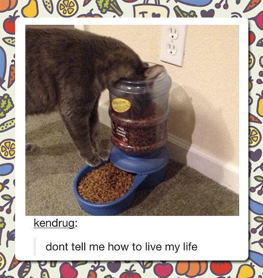 Cat Food Device Fail