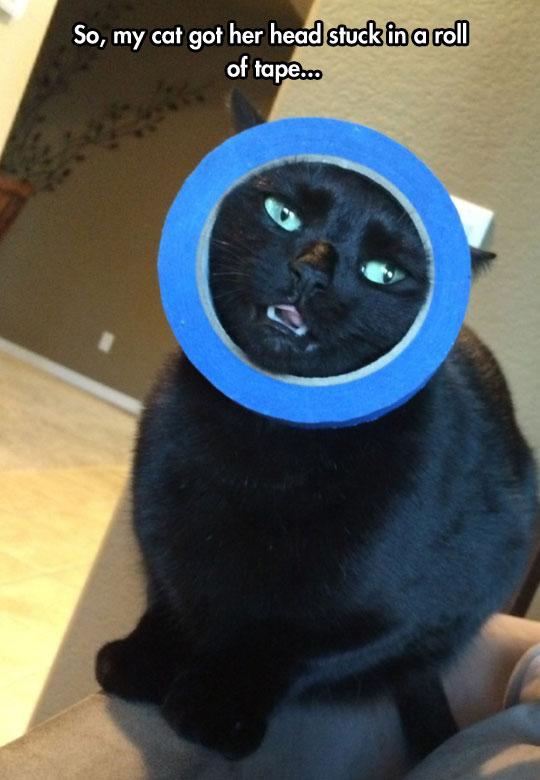 funny-cat-head-stuck-duct-tape