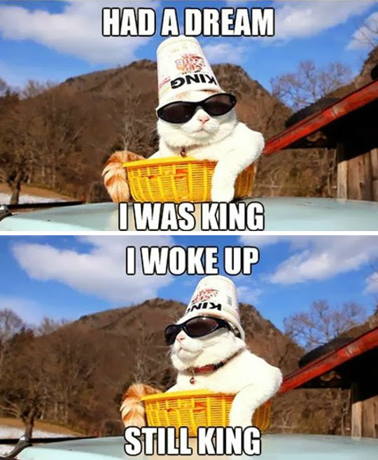 Cat King Rules