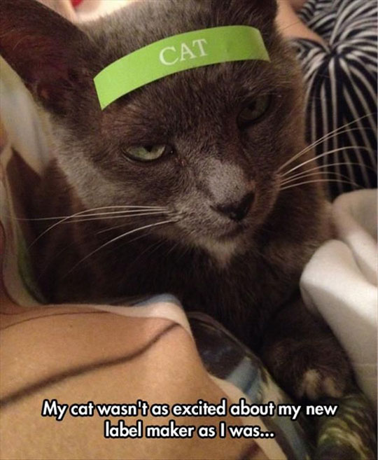 I Believe Cats And Label Makers Are Not A Good Match