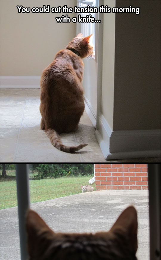 This Is Literally What My Cat Does Every Day